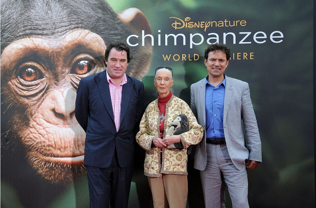 "My Walk Down The Red Carpet Premiere of Disneynature's ""chimpanzee"""