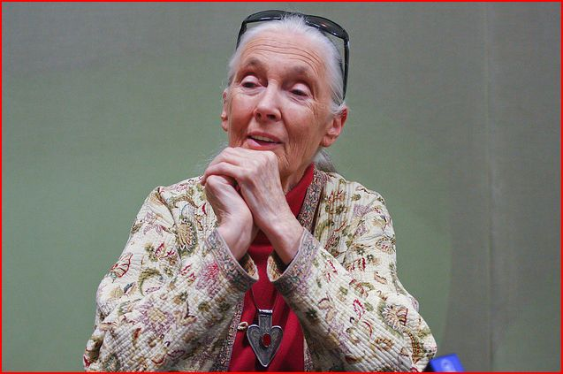 Interview with Dr. Jane Goodall for the Chimpanzee Premiere #chimpanzee #meetoscar