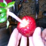 hulling strawberries2