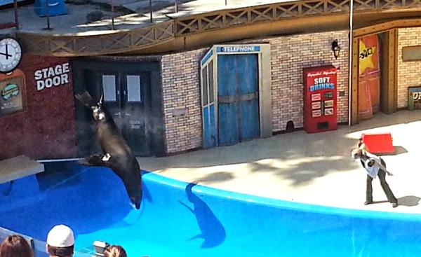 sea lions live