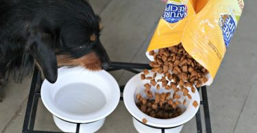 Feeding Our Dog All Natural Dog Food