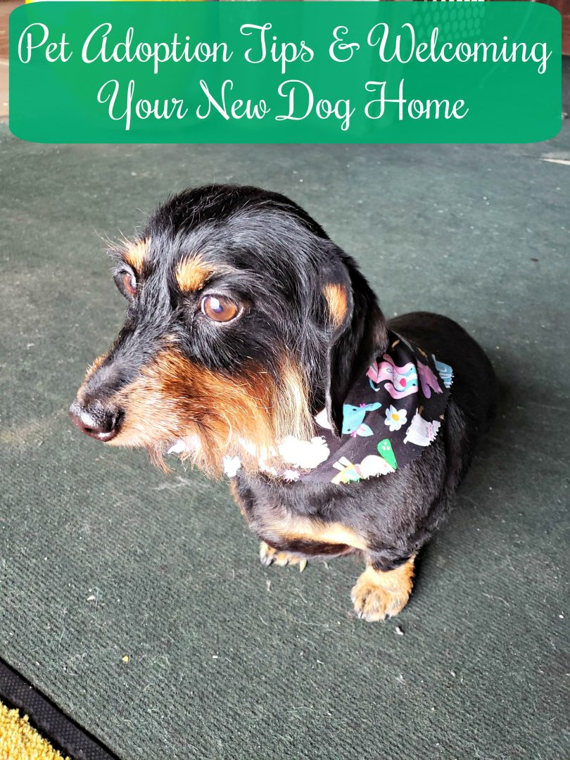 Pet Adoption Tips and Welcoming Your New Dog Home
