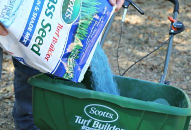 Tips for Fall Lawn Care and Greener Pastures