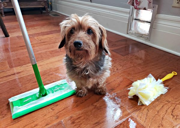 Quick Cleanup Tips for When You Have a Pet