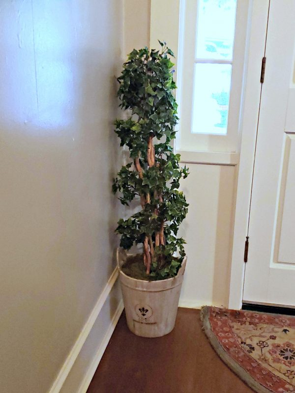 English Ivy Tree in Farmhouse Planter